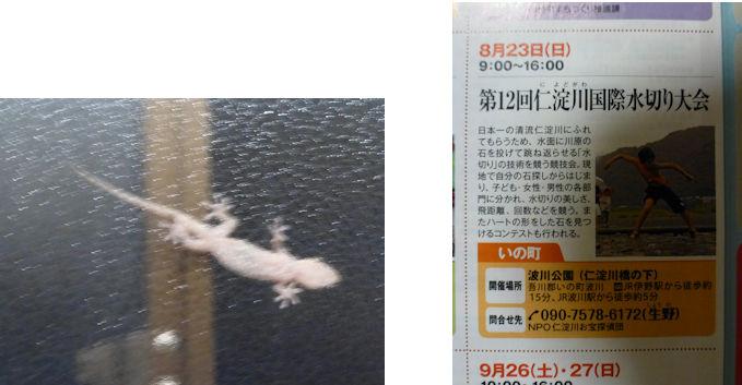仁淀川編(31):森(15.8)_c0051620_21371966.jpg