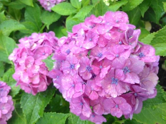 紫陽花色の季節と装い***_e0290872_22012659.jpg