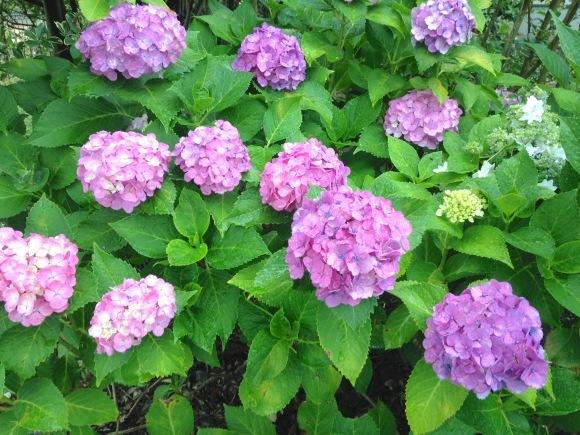 紫陽花色の季節と装い***_e0290872_22014135.jpg
