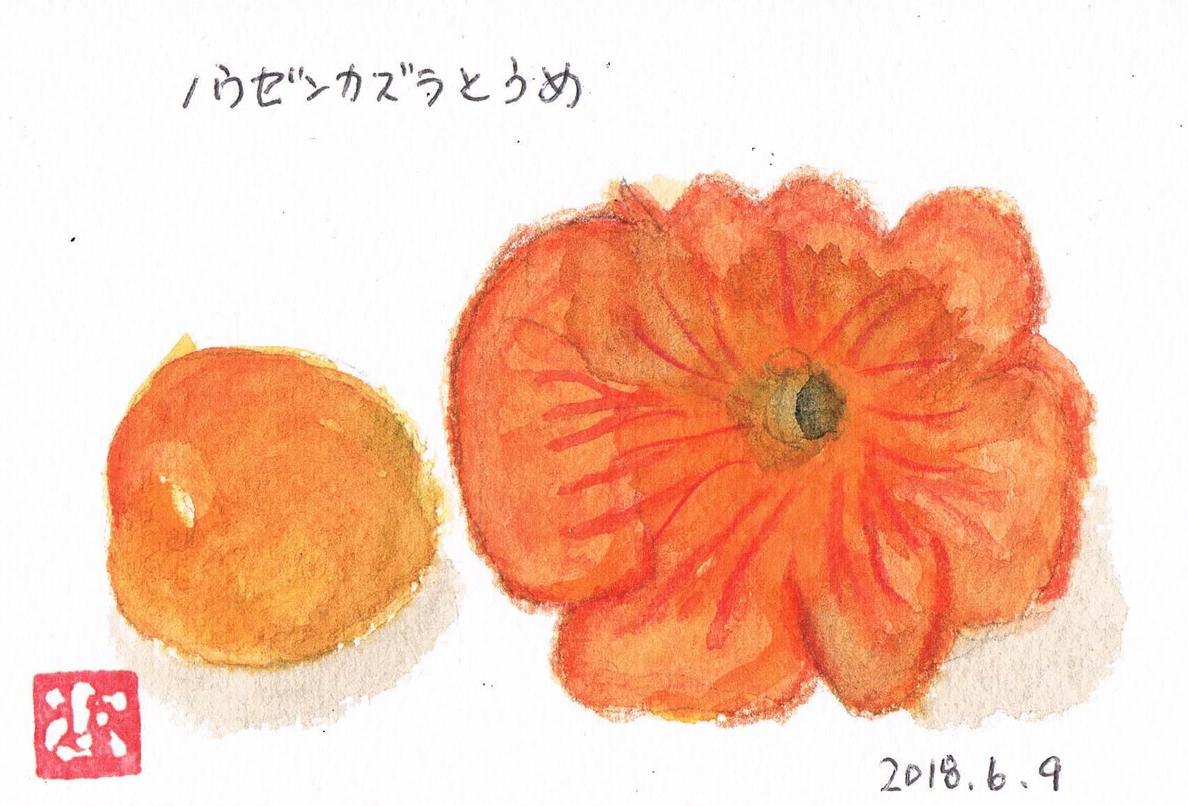 ノウゼンカズラが咲きました_e0232277_10320579.jpg