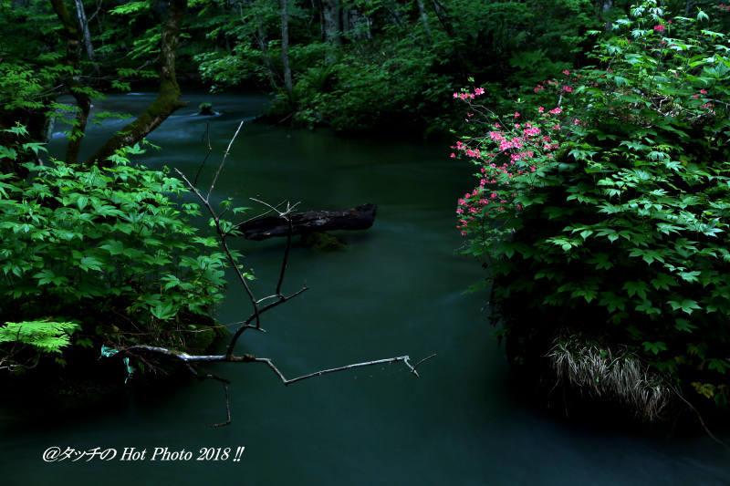 奥入瀬渓流のつつじは今が旬…_d0027893_20050481.jpg