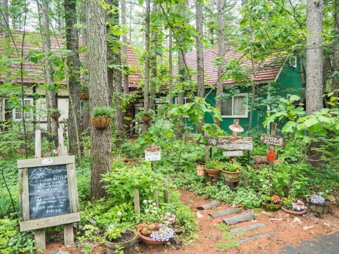庭に自生している「ベニバナイチヤクソウ」が咲き始めました。_f0276498_19360755.jpg