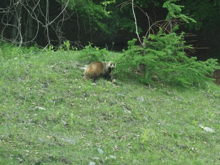 野生動物との距離感_f0224100_13580037.jpg
