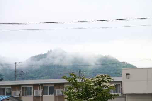 雨上がりの朝の散歩は、TSUTAYAへ_c0075701_06405072.jpg