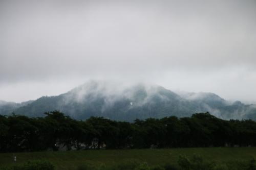 雨上がりの朝の散歩は、TSUTAYAへ_c0075701_06411040.jpg