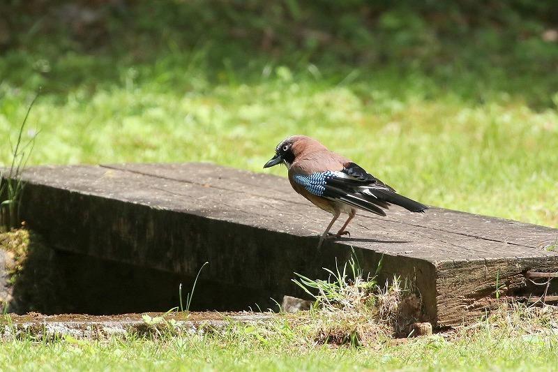 幼鳥がいた_f0327034_07055247.jpg