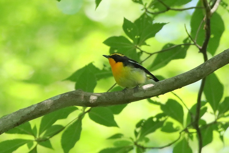 幼鳥がいた_f0327034_07061391.jpg