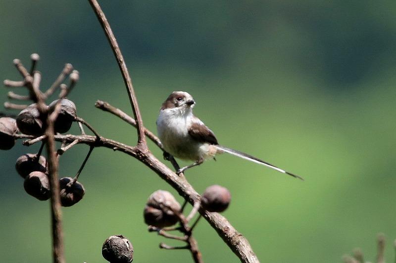 幼鳥がいた_f0327034_07062152.jpg