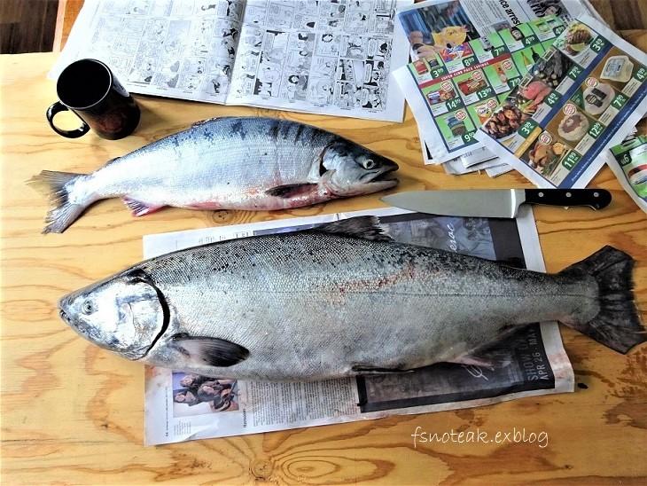 今期初 King & Red Salmon_d0356844_07291249.jpg