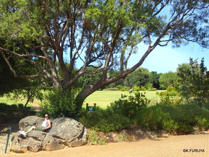 """世界遺産の中にある植物園 """"カーステンボッシュ植物園""""_a0092659_14231217.jpg"""