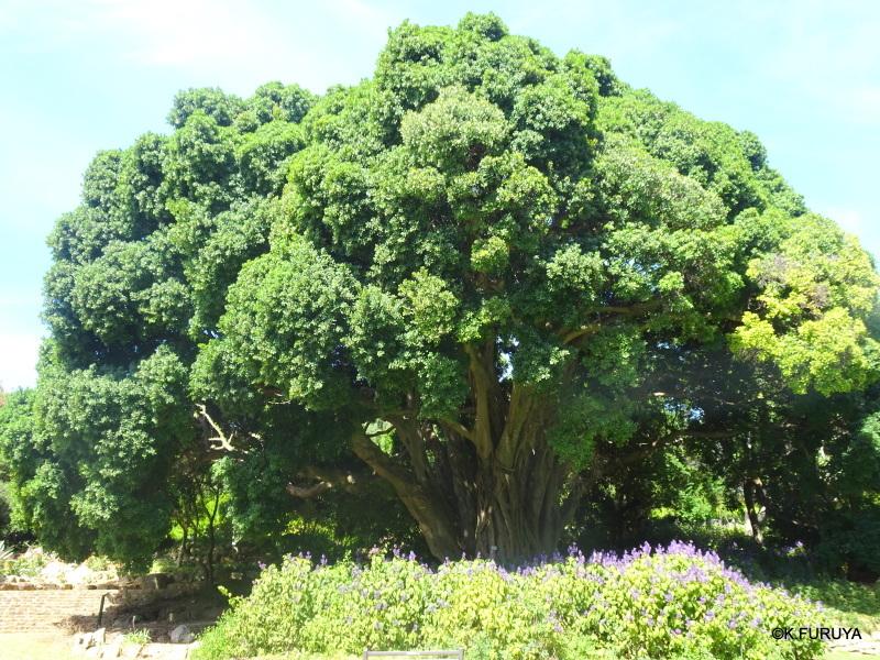"""世界遺産の中にある植物園 """"カーステンボッシュ植物園""""_a0092659_14263514.jpg"""