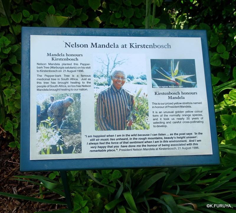 """世界遺産の中にある植物園 """"カーステンボッシュ植物園""""_a0092659_15180610.jpg"""