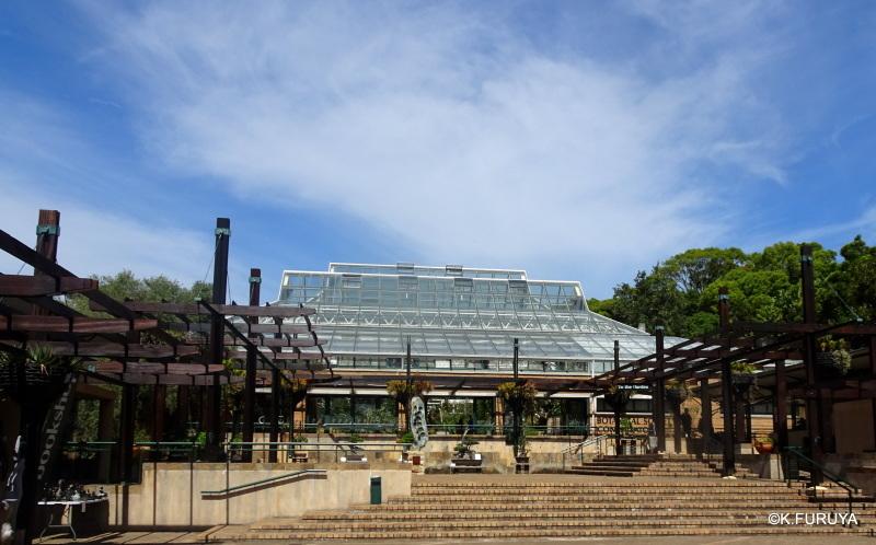 """世界遺産の中にある植物園 """"カーステンボッシュ植物園""""_a0092659_15230839.jpg"""