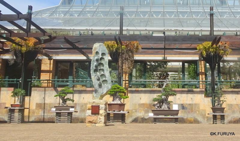 """世界遺産の中にある植物園 """"カーステンボッシュ植物園""""_a0092659_15261305.jpg"""