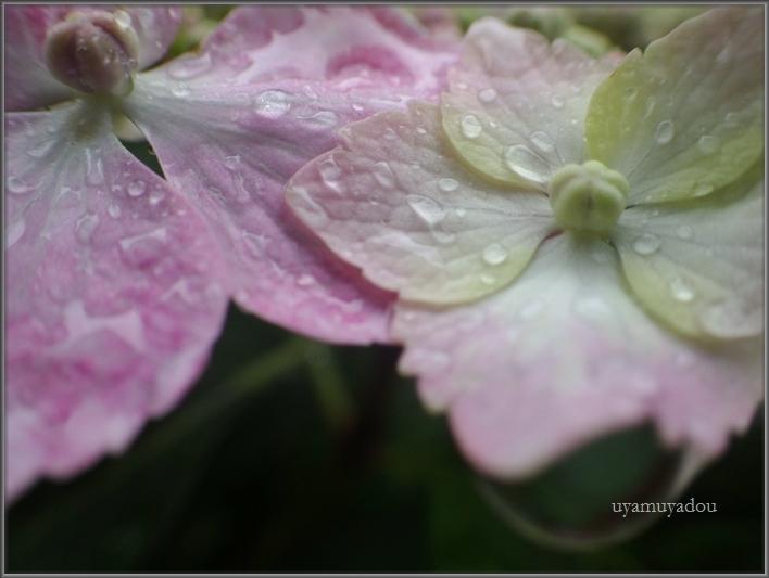 雨......._a0157263_22182081.jpg