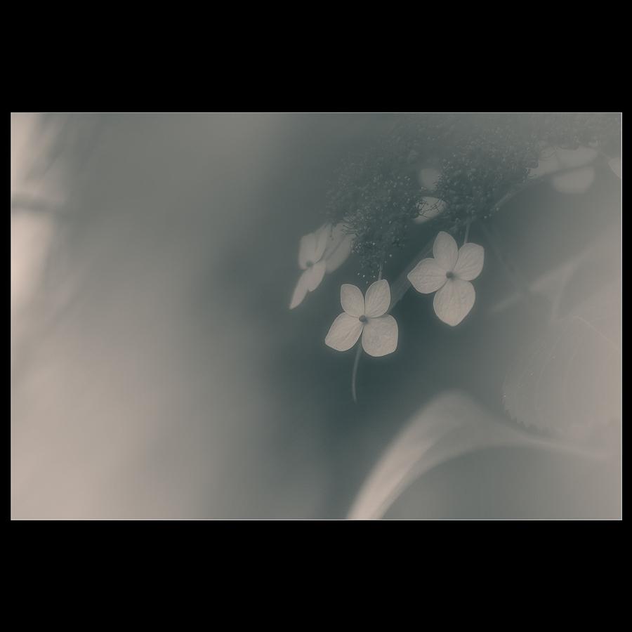 f0369264_19353081.jpg