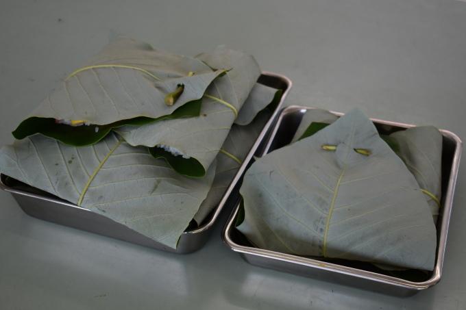 中学校で行われた郷土料理体験に参加してきました_c0238069_15191240.jpg