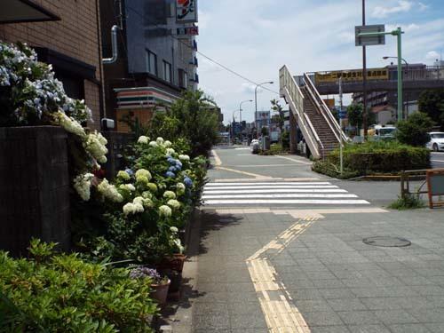 ぐるっとパスNo.15 町田市立国際版画美術館まで見たこと_f0211178_19103673.jpg