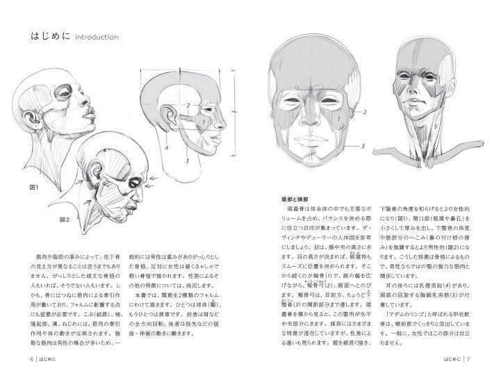 2018年06月 新刊タイトル モルフォ人体デッサン ミニシリーズ 骨から描く_c0313793_07582166.jpg