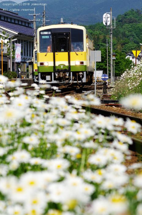 白い花の咲く_d0309612_23274297.jpg