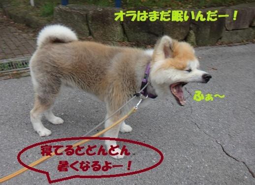 f0121712_16315264.jpg