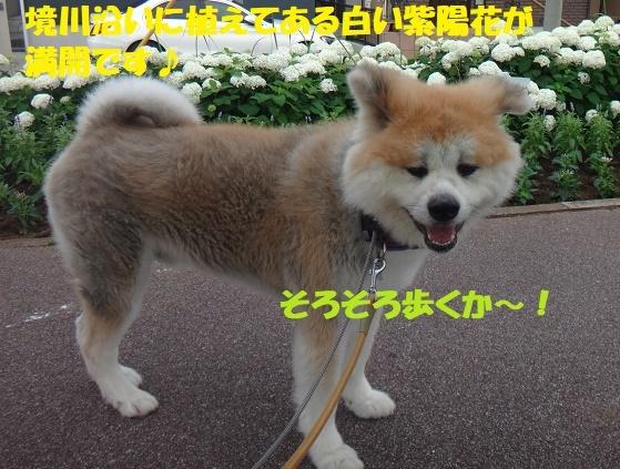 f0121712_16350768.jpg