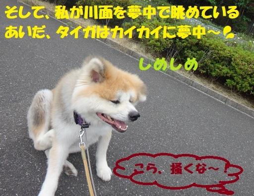 f0121712_16494049.jpg
