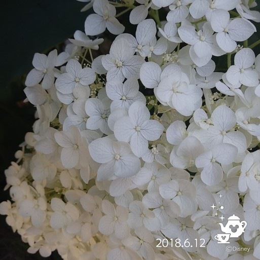 f0262033_05350682.jpg
