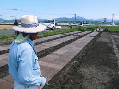 無農薬栽培のひのひかり100%使用の『米粉』大好評販売中!平成30年度の米作り!苗床の様子を現地取材!_a0254656_17155156.jpg