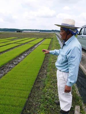 無農薬栽培のひのひかり100%使用の『米粉』大好評販売中!平成30年度の米作り!苗床の様子を現地取材!_a0254656_17190979.jpg