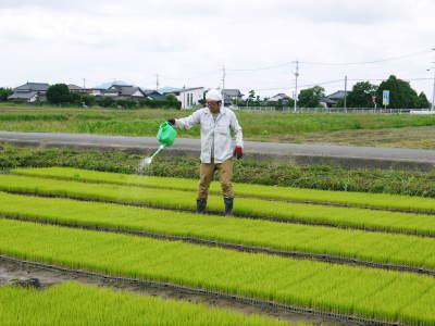 無農薬栽培のひのひかり100%使用の『米粉』大好評販売中!平成30年度の米作り!苗床の様子を現地取材!_a0254656_17231978.jpg