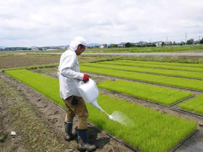 無農薬栽培のひのひかり100%使用の『米粉』大好評販売中!平成30年度の米作り!苗床の様子を現地取材!_a0254656_17253677.jpg