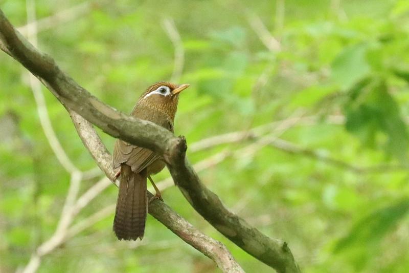 賑やかな鳥さん♪_a0167759_1315026.jpg