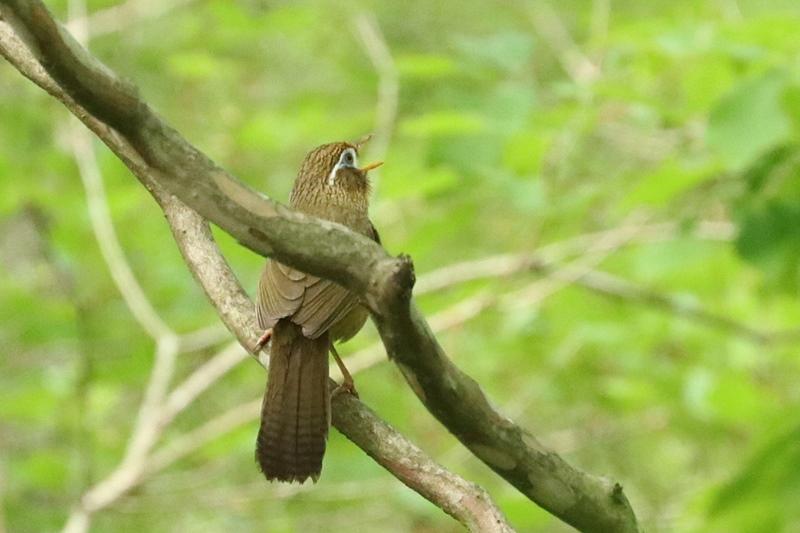賑やかな鳥さん♪_a0167759_1323375.jpg
