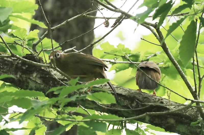 賑やかな鳥さん♪_a0167759_1334524.jpg