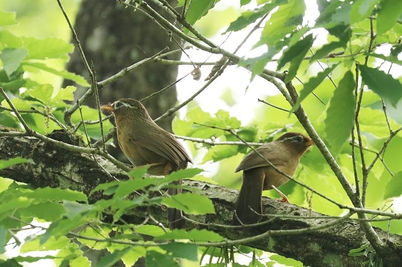 賑やかな鳥さん♪_a0167759_134724.jpg