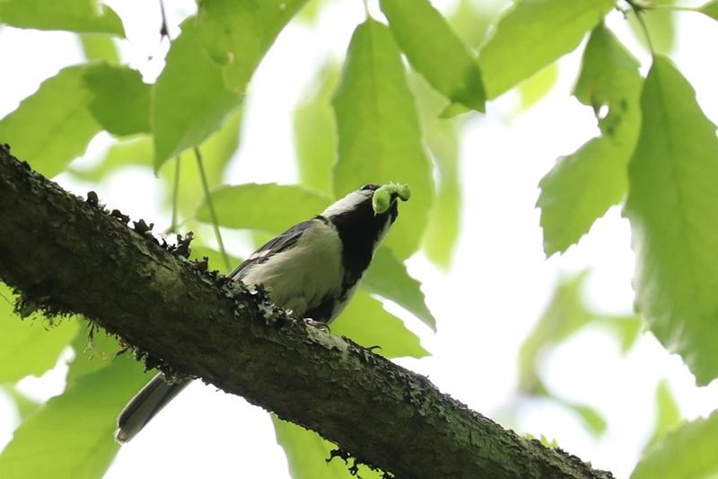 賑やかな鳥さん♪_a0167759_1354728.jpg
