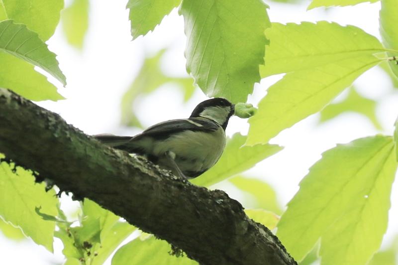 賑やかな鳥さん♪_a0167759_136278.jpg