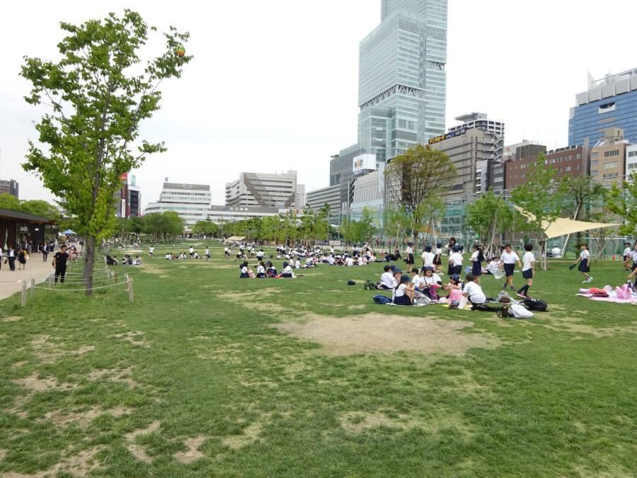 6月の13小校庭芝生_f0059673_22210158.jpg