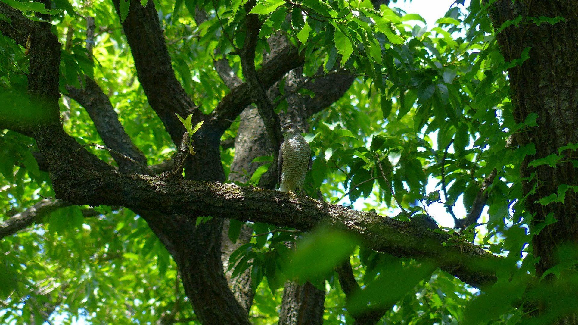 雀鷹の森では_a0185081_00311471.jpg