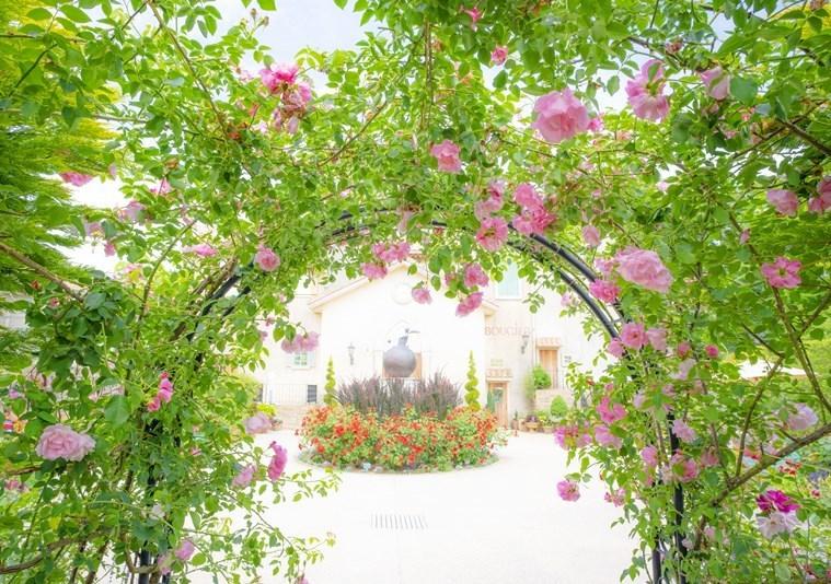 バラ満開の星の王子さまミュージアム♪_b0145398_23383631.jpg