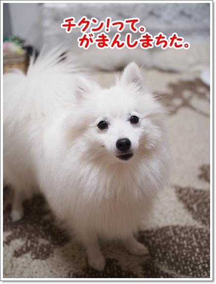 d0013149_00012013.jpg