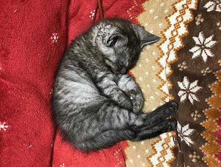とうとうウチの猫になってしまうのか・・・_e0362456_02122833.jpg