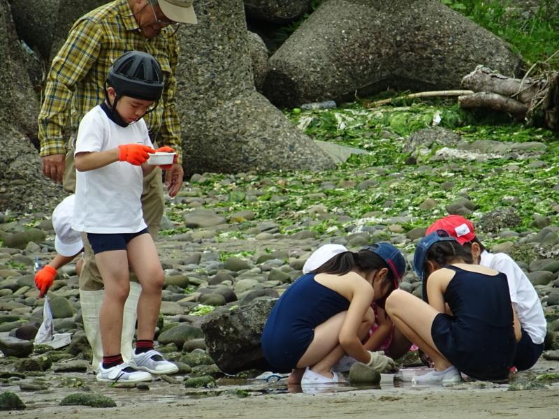 下荘小学校2年生「浜辺の生き物観察」・・・箱作西浜自然海岸_c0108460_20483385.jpg