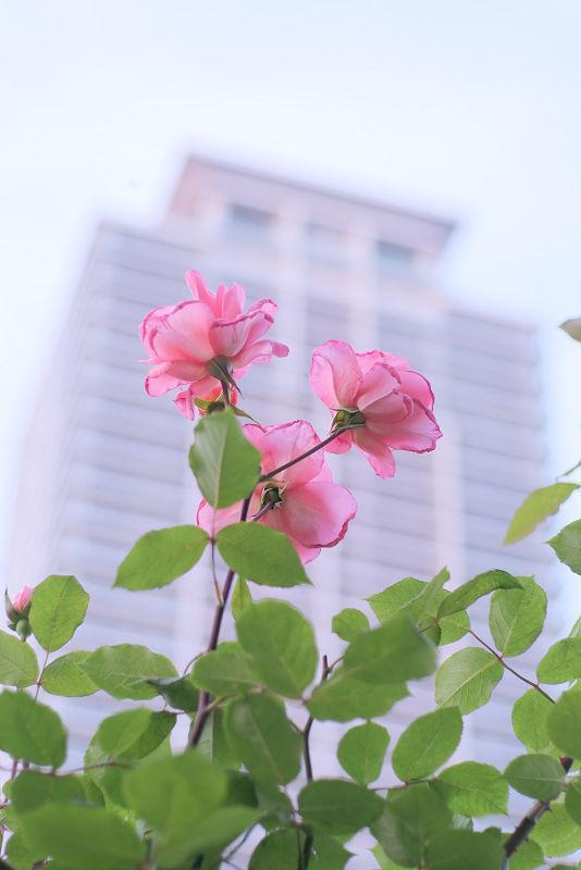 中之島公園_f0021869_21183006.jpg