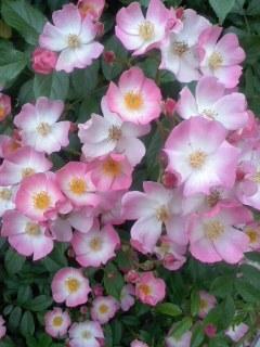 バラ見処/Flower viewing_d0090888_10513501.jpg