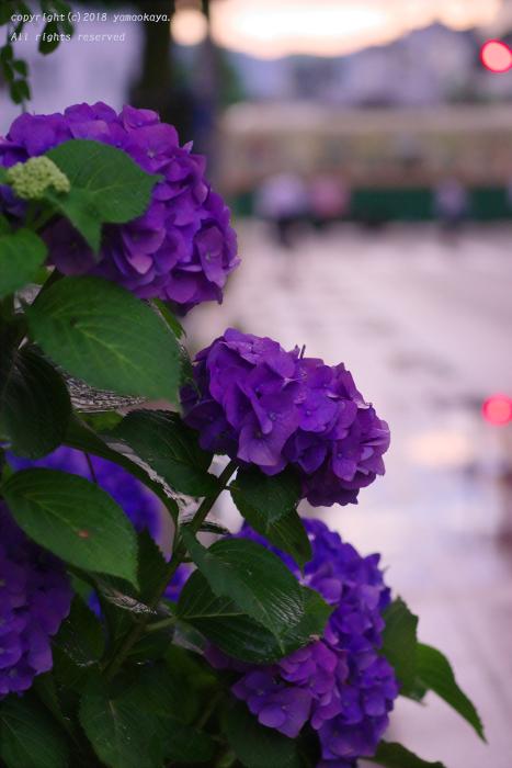 いきなりの雨に_d0309612_23095074.jpg