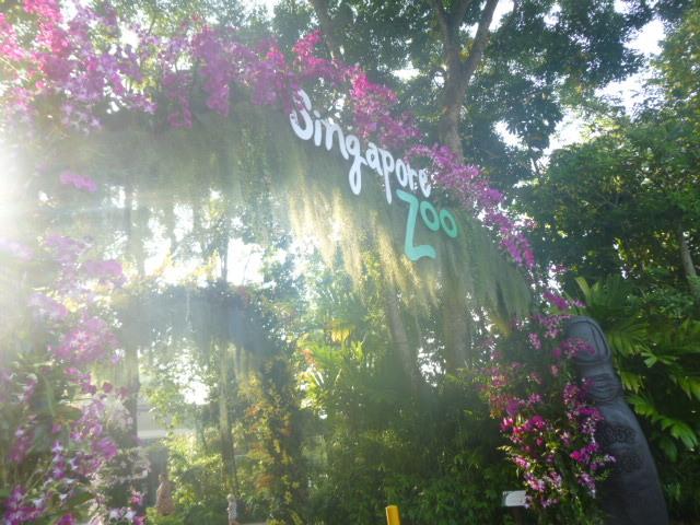 どうぶつえ~ん(Singapore zoo)_d0336014_01123944.jpg