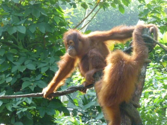 どうぶつえ~ん(Singapore zoo)_d0336014_01130355.jpg