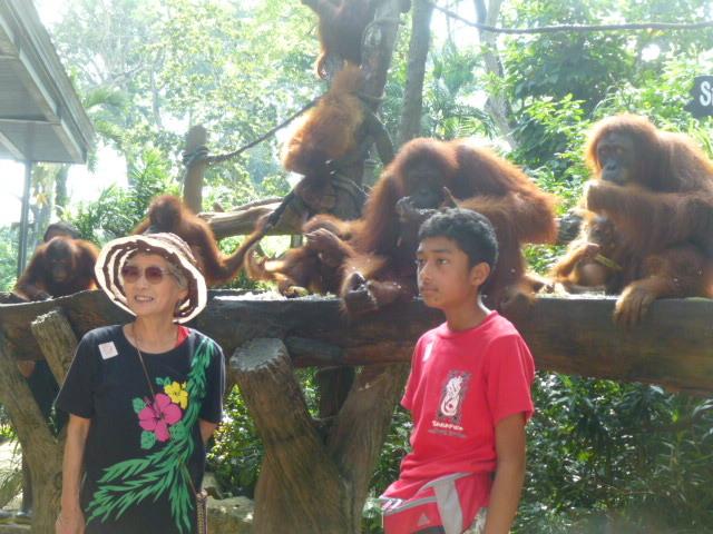 どうぶつえ~ん(Singapore zoo)_d0336014_01132530.jpg